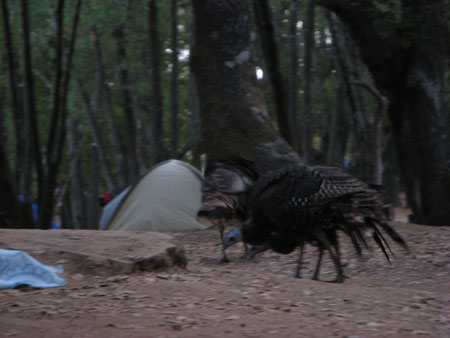 turkeycamp